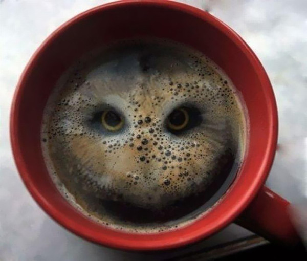 Owl_in_a_Cup